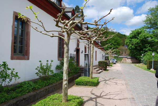 kloster-eberbach-innen4