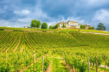 weinlagen-Rheingau